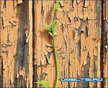 Составы для обработки древесины