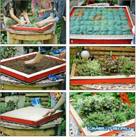 Картины из живых растений