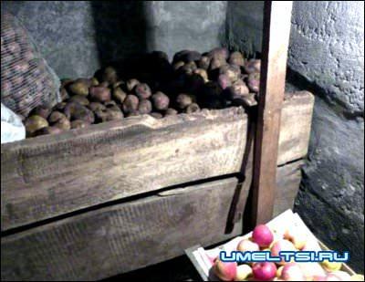 В сухом подвале и овощи и фрукты хорошо хранятся