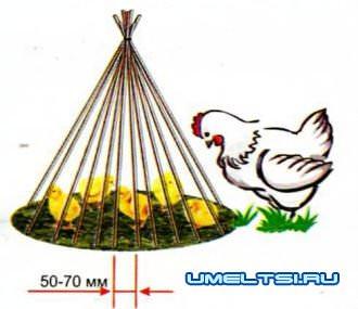 цыплята клюют