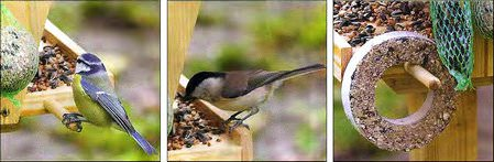 птицы прилетели к кормушке, фото