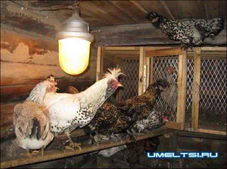 Теплый сарай для кур