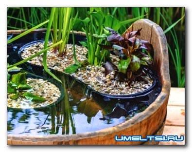 Мини-пруд своими руками из деревянной кадки