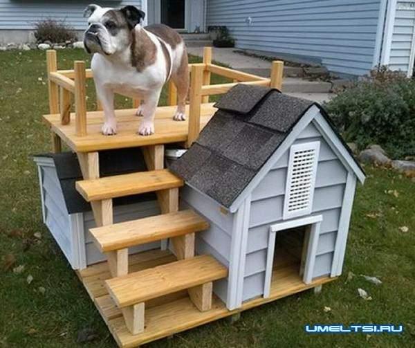 Примеры собачьей будки с площадкой на крыше