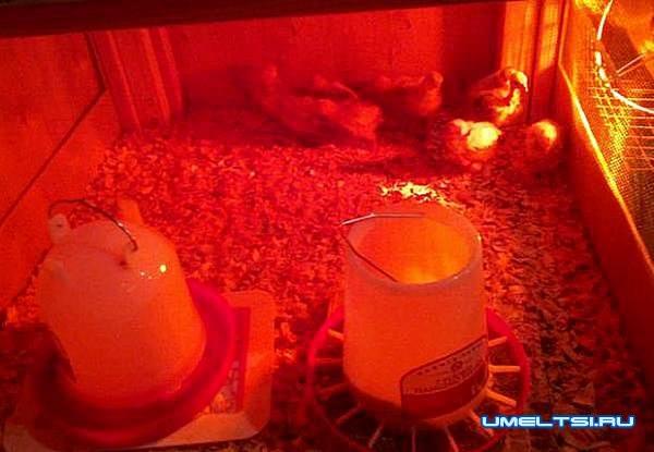 брудер для цыплят своими руками-лампы