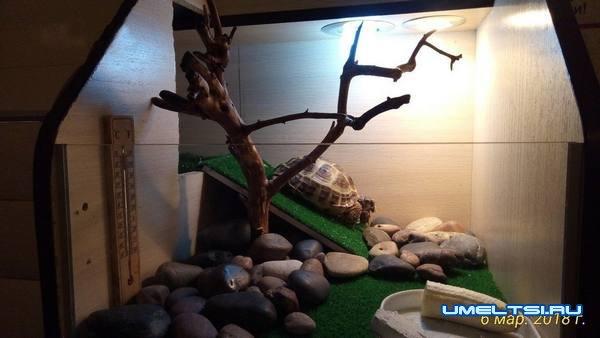 Террариум для черепахи - фото