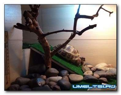 Террариум для черепахи своими руками