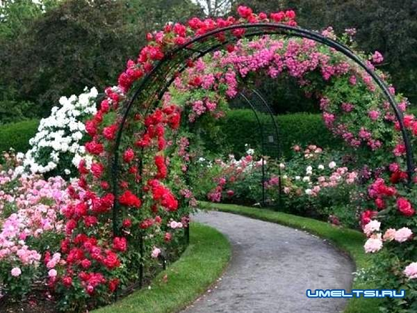 Примеры арок для роз из арматуры: фото