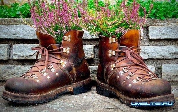 Идеи высадки цветов в саду