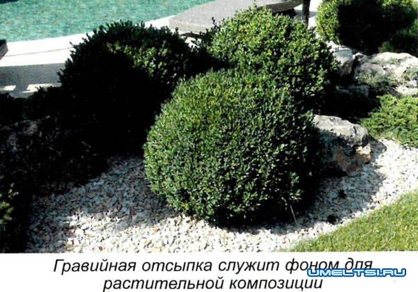 Гравийный сад: технология построения